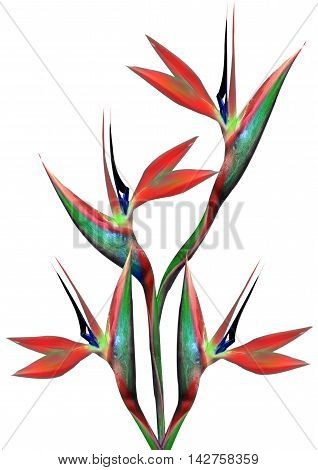 bouquet of flowers bird of paradise on a white background