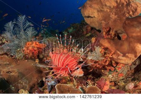 Coral reef and fish. Underwater ocean landscape. Lionfish