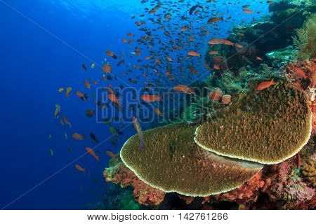Coral reef and fish. Underwater ocean landscape.