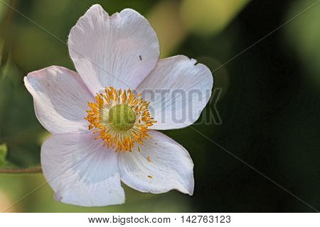 the most beautiful flower . show incredible detail of nature. images full of essence.