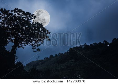 Silhouette Of The Branches Of Trees Against The Night Sky In A Moon.  Outdoor.