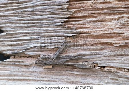 Traces of termites eat wood background, house problem