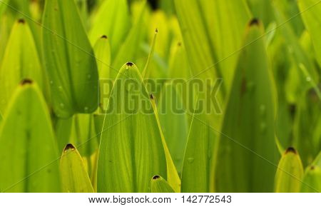 Photograph of leaves of aquatic plants in small lake.