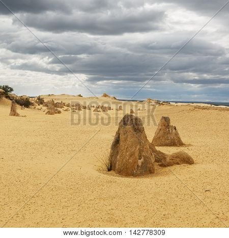 Yellow sand dunes and limestone pillars Pinnacles Desert in the Nambung National Park Western Australia.