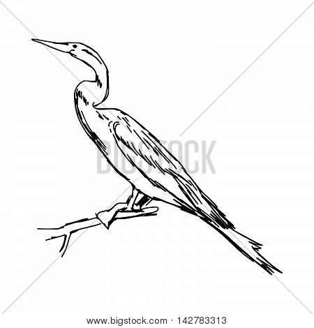 illustration vector hand drawn sketch of African Darter isolated on white background