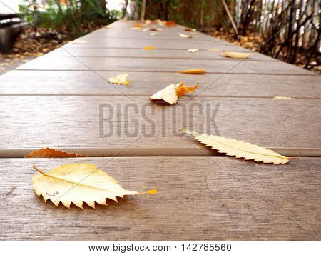 Focus on the yellow leaf on the wooden floor