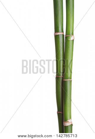 Two branches of bamboo isolated on white background.