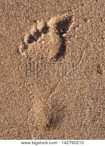 Woman Single Footprint In Wet Beach Sand