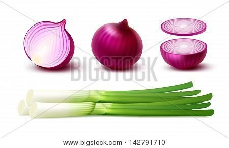 Vector Set of Fresh Whole and Sliced Red Onion Bulbs with Green Onions Close up Isolated on White Background
