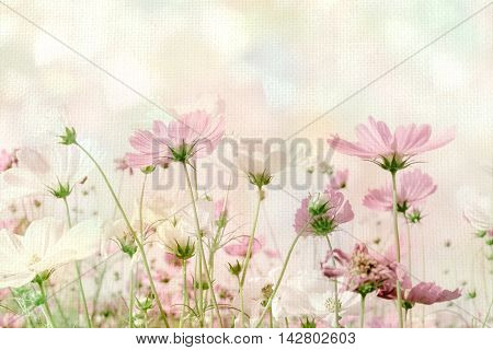 Soft focus cosmos flower on mulberry paper with bokeh vintage pastel background