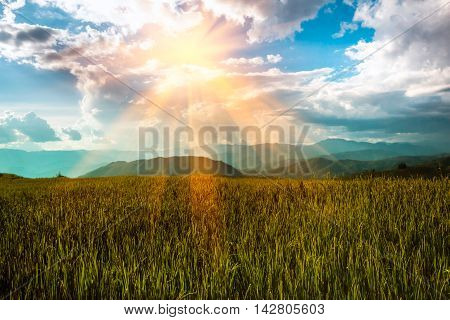 View of landscape rice field and mountian at ChaingmaiThailand