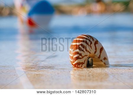 sea shell nautilus on swimming pool edge at  resort, shallow dof