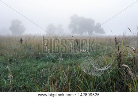 Cobwebs On The Grass