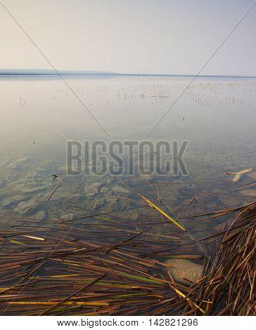 Reeds along the shoreline of a lake in Saskatchewan Canada