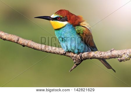 colorful bird on a branch, birds of paradise, European fauna, birds and beeswith sunny hotspot