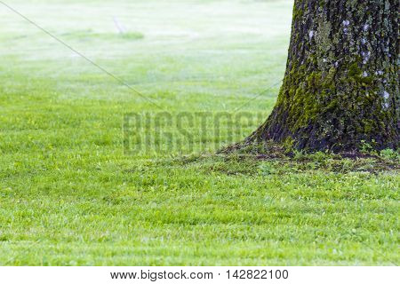 Part of the oak tree trunk on a green meadow as background with copy space