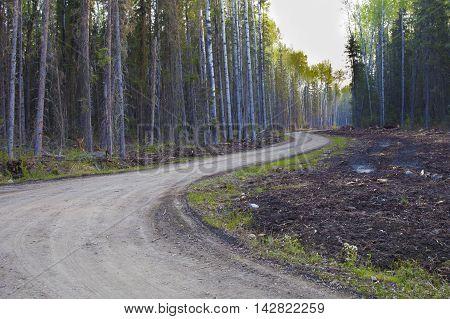 Dusty road winding through a thick forest in Saskatchewan Canada