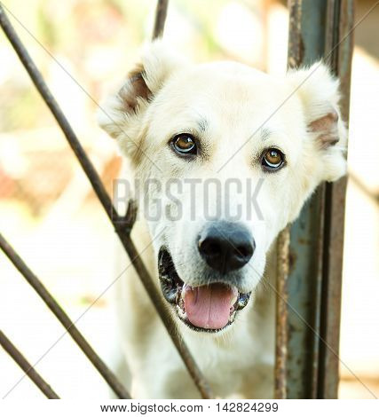 A dog in an animal shelter waiting for a home