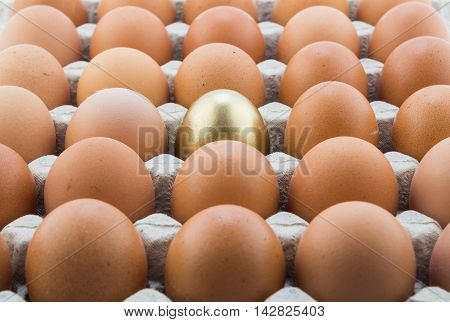 Abstract background with single golden egg and many normal hen eggs in carton