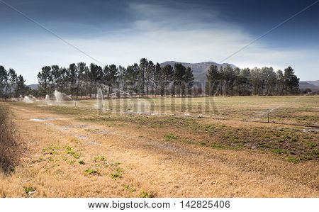 Image of dry meadow being irrigated with sprays of water