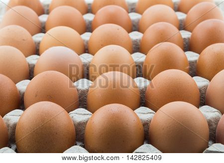 Background of fresh hen eggs in rows inside shop cardboard container