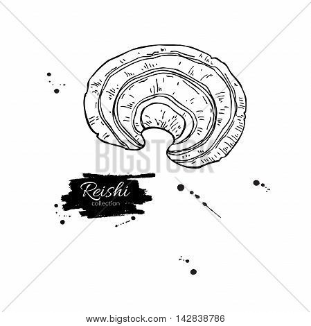 Reishi mushroom vector superfood drawing. Isolated hand drawn illustration on white background. Organic healthy food. Great for banner poster label sign