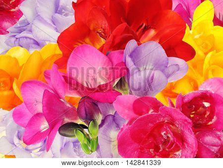 Beautiful freesias background. Floral seamless pattern.