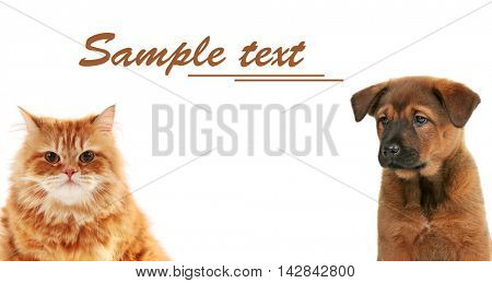 Cute puppy and adorable cat on white background. Space for text.