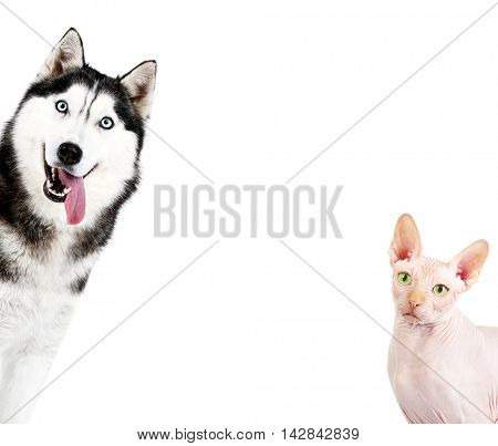 Cute dog and cat on white background. Space for text.