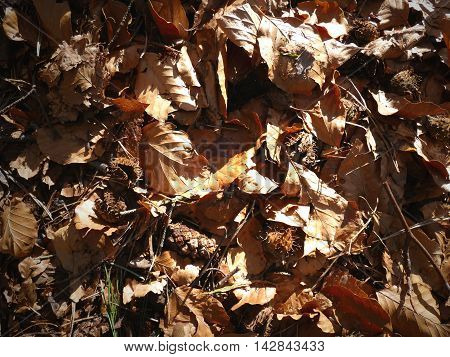 Fallen Leaves Close Up Background With Great Contrast