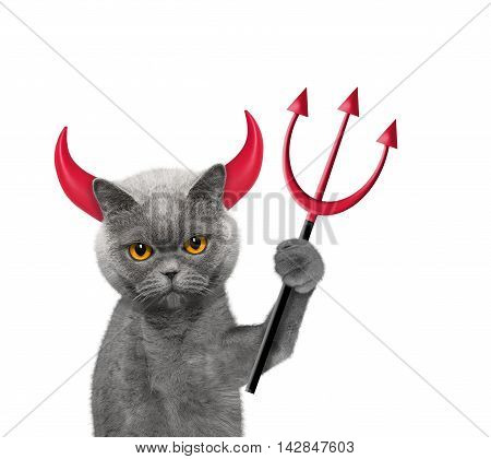 Devil is cat`s costume for Halloween -- isolated on white