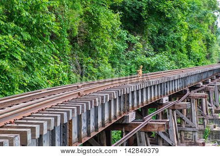 Dog on the Death Railway bridge at Krasae Cave in Kanchanaburi Thailand.