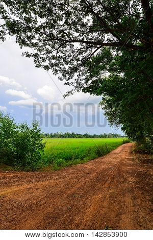 Dirt Street nearby the Rice Cornfield Phichit Thailand