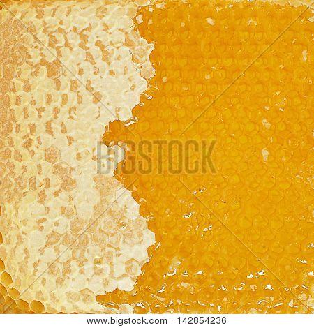 sweet Honey comb texture - golden background