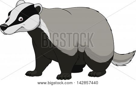 Vector illustration adult funny badger smiling on a white background