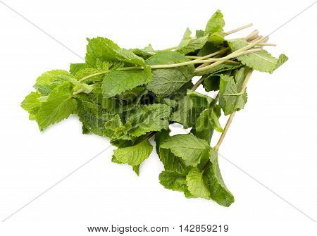 The fresh mint isolated d d d