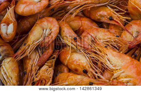 Seafood red shrimp as background texture closeup