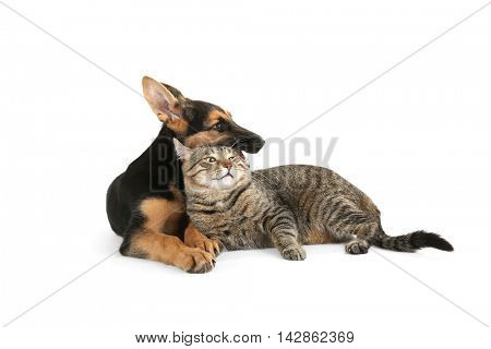 Cute dog and cat, isolated on white