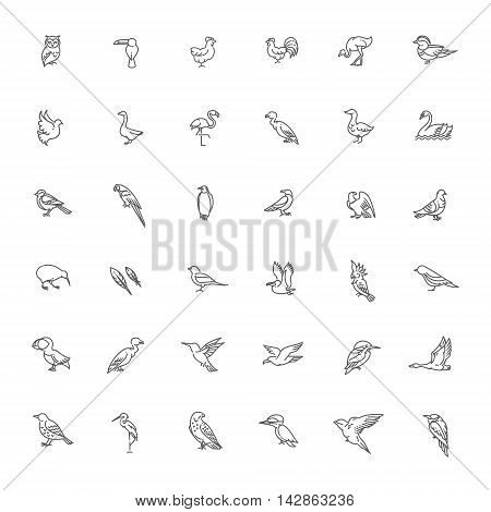 Set of different birds. Vector line icons
