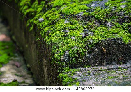Mossy Brick Beside Walk Path To The Peak