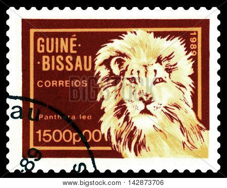 STAVROPOL RUSSIA - August 11 2016: A stamp printed by Guinea - Bissau shows African Lion circa 1989.