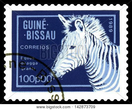 STAVROPOL RUSSIA - August 11 2016: A stamp printed by Guinea - Bissau shows African Zebra circa 1989.