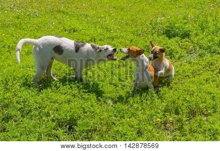 Dogs discuss who is the leader on the yard