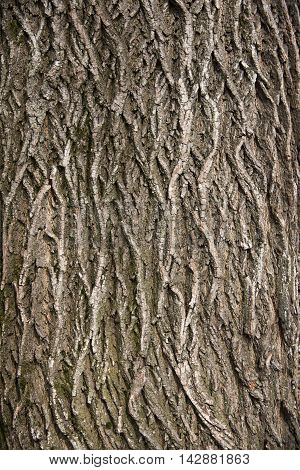 Relief tree bark. The wavy structure of tree bark. Texture background