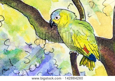 Original watercolor painting of an Orange-winged Amazon parrot perching in a tree.