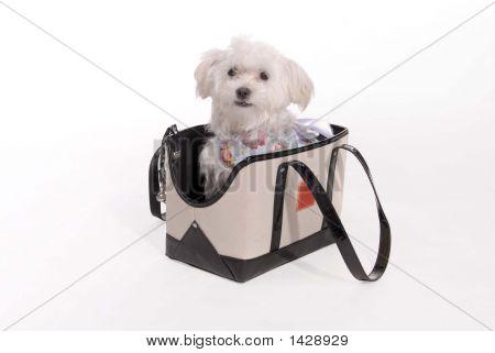 Puppy_Bag