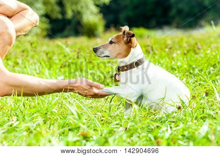 Dog And Owner Training