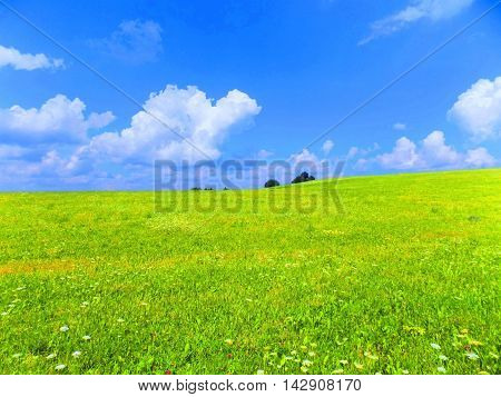 Meadow and sky during sunny day in wild nature