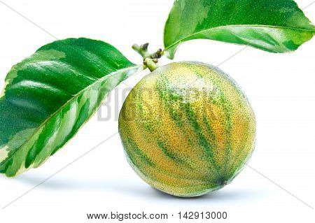 Variegated Lemon with two leaves on a white background