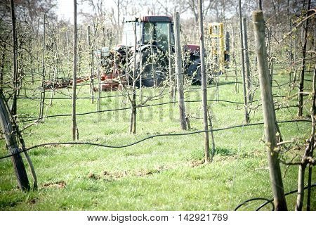 A tractor with plow plowing between the bushes a apple tree plantation.